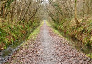 Tarka Trail on Clay Moor cycle route